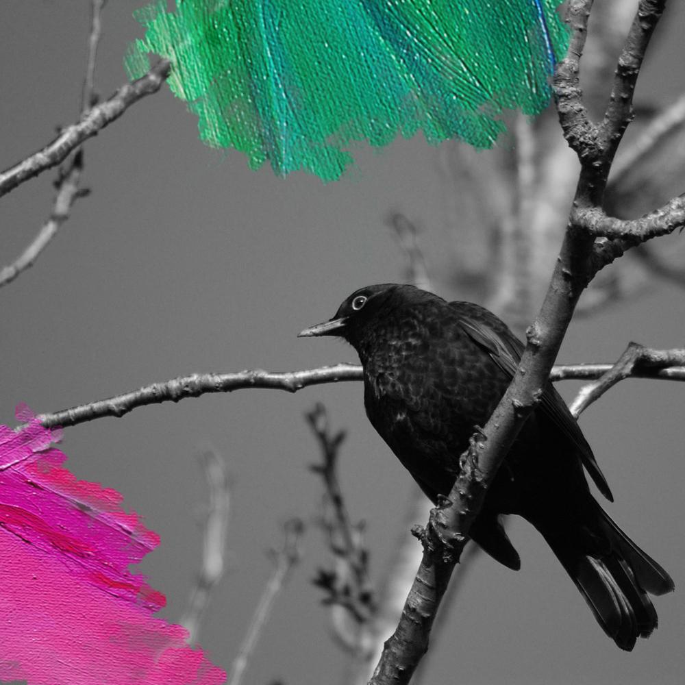 Foto: Eveline MrsBrown (2010) Merel op fruitboom. Bewerkt door MooierMens.app, 23-03-2018. https://pixabay.com/nl/natuur-vogel-merel-zwart-boom-tak-1441861/